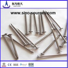 Clout head galvanized nails factory